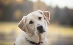 В Цимлянске спасатели извлекли собак со дна колодца