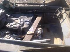 На Дону пограничники задержали браконьеров с уловом на 7 млн рублей