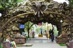 Власти Краснодара намерены продолжить давление на «Сафари-Парк» (видео)