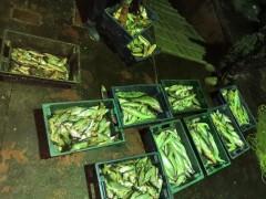 В Ростовской области пограничники задержали браконьеров с уловом на 3 млн рублей