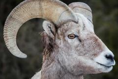 В Ростовской области пограничники не впустили отару овец без документов
