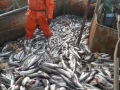 Рыбодобывающая компания «АзовРыбакСоюз» заплатит еще один штраф