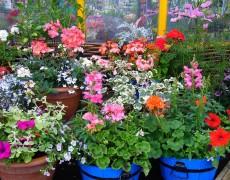 Опрос: 48% россиян выращивают дома цветы
