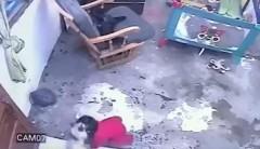 В Колумбии кот спас младенца от падения с лестницы