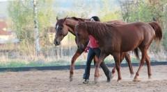 Танцы лошади