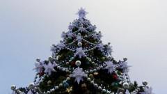Мэр Кемерово оправдался за покупку новогодней елки за 18 млн рублей