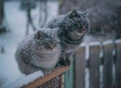 В Гидрометцентре сделали прогноз зимы в России