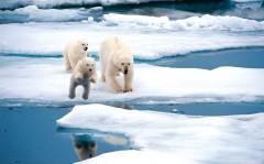 Россия создаст над Арктикой противовоздушный купол