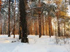 В Ленобласти пьяная женщина сбежала после ДТП в лес и пропала