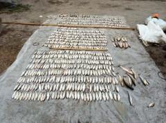 На Кубани решение суда в отношении браконьера вступило в силу