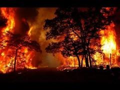 В Австралии лесные пожары уничтожили свыше 1 млрд животных