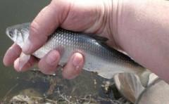 На Кубани браконьер, выловивший рыбу на 740 тысяч рублей, отделался условным тюремным сроком