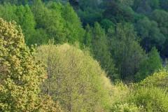 В ЮФУ поговорят о расширении территорий, занятых зелеными насаждениями в Ростовской области