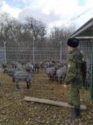Донские пограничники задержали сотню «вегетарианцев»-нелегалов