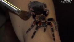 Житель Брянска завел в квартире около 50 экзотических пауков