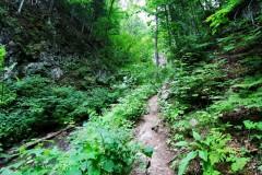 Для защиты лесного фонда Кубани вносятся изменения в генпланы