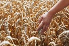 На агрострахование Кубани направят более 330 млн рублей