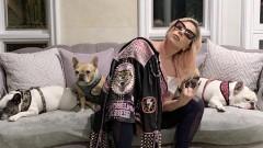 Леди Гага самоизолировалась с собаками из-за коронавируса и надеется на лучшее