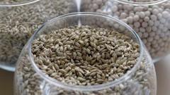 Замещение импорта семян