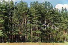 Из генпланов пяти муниципалитетов края исключены земли лесного фонда