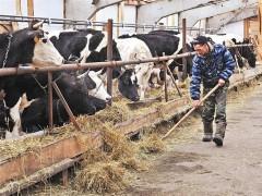 На поддержку начинающих фермеров выделят миллионы