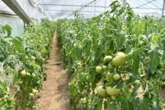 В Тимашевском районе реализовали три инвестпроекта в АПК