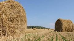 Ключевые отрасли АПК Кубани получат дополнительную поддержку