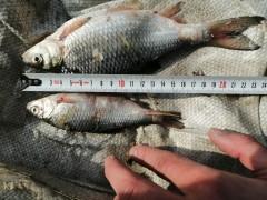 В Приморско-Ахтарском районе Кубани задержан браконьер с уловом на 650 тысяч рублей