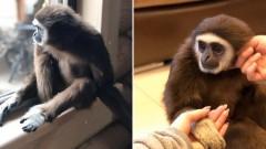 В зоопарке Иркутска утешают брошенных из-за коронавируса обезьян