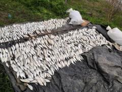 На Кубани поймали браконьера с уловом на 4,7 млн рублей