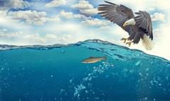 Запрет добычи, особенности снастей: пограничники напомнили об особенностях промышленного рыболовства