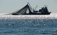 В Приморско-Ахтарске за нарушение правил рыболовства накажут должностное лицо