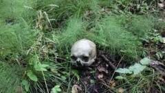 В Ленобласти женщина, гуляя по лесу, наткнулась на человеческий череп
