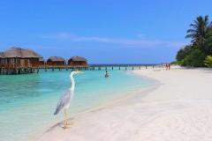 На Мальдивах из-за коронавируса остаются сотни туристов