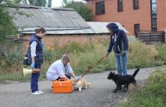 В Ростове домашних животных бесплатно привьют от бешенства