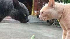 Две кошки рассмешили Сеть, испугавшись носка