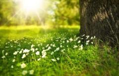 Синоптики предсказали теплый июнь в России