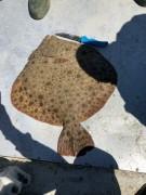 В Анапе задержан браконьер с запрещенной к вылову камбалой-калкан