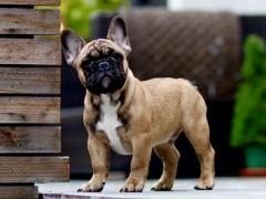 В США собака съела комнатное растение и умерла