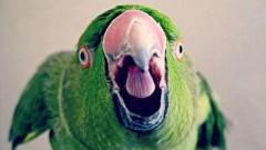 В Британии попугай помог хозяйке задержать грабителя