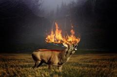 В Бурятии удалось потушить 17 лесных пожаров