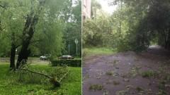 В Москве распространено предупреждение о дожде и сильном ветре