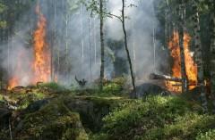 В штате Юта фейерверки привели к сильному лесному пожару