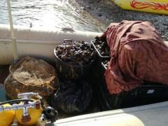 120 кг добычи: пограничники пресекли браконьерский вылов мидий на Утрише