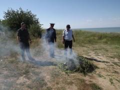 На Дону с участием пограничников ликвидировано 20 гектаров конопли