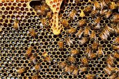 В Ростовской области ищут решение проблемных вопросов пчеловодства
