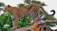 Обратная сторона «медали» передвижного зоопарка: в Анапе мужчину заподозрили в экологическом преступлении