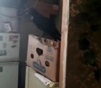 В Ростове ветспециалисты проинспектировали домашний зверинец в коммунальной квартире