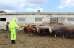Донские ветврачи провели более 2,5 млн противоклещевых обработок скота