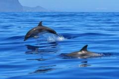 Актив ОНФ Кубани борется за сохранение популяции дельфинов в Черном море